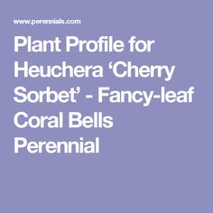 Plant Profile for Heuchera 'Cherry Sorbet' - Fancy-leaf Coral Bells Perennial