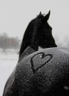horse in the snow, heart