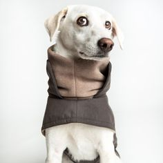 Do I look warm in this Dog Coat? Luxury Pet Beds, Designer Dog Beds, Diy Dog Bed, Dog Cushions, Brooklyn, Pet Fashion, Pet Furniture, Dog Coats, Bedding Collections
