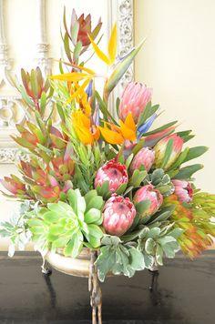 Strelitsia, crotea and succulents