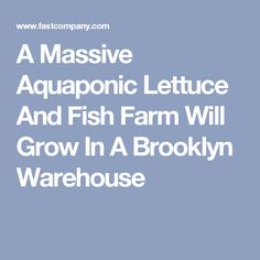 A Massive Aquaponic Lettuce And Fish Farm Will Grow In A Brooklyn Warehouse