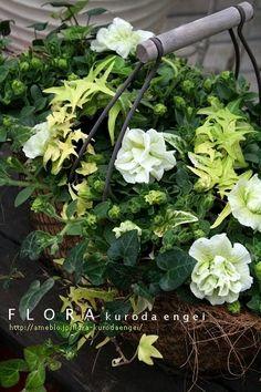 フローラのガーデニング・園芸作業日記-八重咲きペチュニア・ホワイトバニラ 寄せ植え