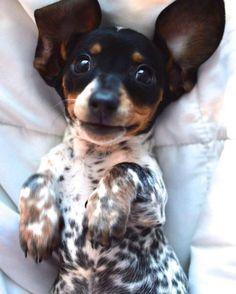 big ears, biggest smile :)