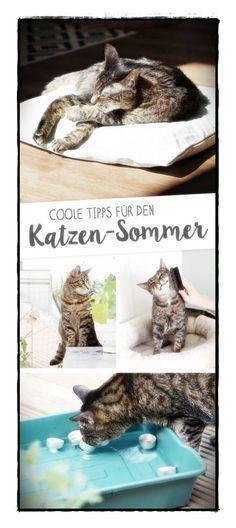 Coole Tipps für den heißen Katzen-Sommer auf www.aentschiesblo… Astuces sympas pour l& chaud www. Crazy Cat Lady, Crazy Cats, Living With Cats, Cat Hacks, Cat Room, All About Cats, Cat Life, Pet Care, Animals And Pets