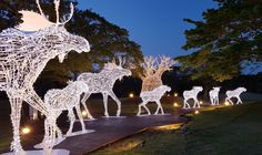 Have you ever wondered how lighting can be used effectively in the warm, summer months to create unique experiences that attract visitors? Take a look at the how Jeju Art Park did just that! Outdoor Christmas, Christmas Time, Christmas Decor, Wildlife Tourism, Zoo Lights, Celebration Around The World, Holiday Lights, Work Inspiration, Time Art