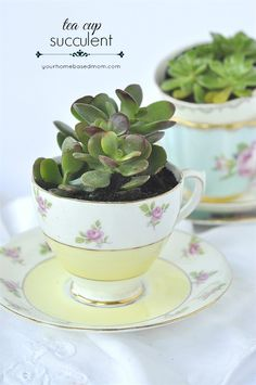 These DIY Tea Cup Succulents are a cute way to add greenery to your small space.