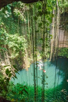 Spend the day in the Yucatan jungle snorkeling and kayaking in four swimming holes amid flora and fish