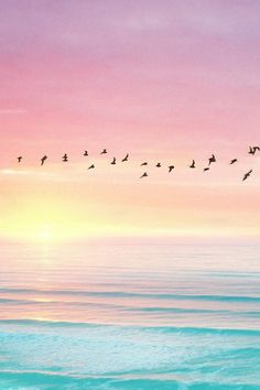 Birds flying against skyline - sunset, pink sky, blue ocean (contrast) Cute Wallpapers, Wallpaper Backgrounds, Phone Wallpapers, Beach Wallpaper, Peaceful Backgrounds, Pastel Pink Wallpaper, Sunshine Wallpaper, Heaven Wallpaper, Summer Wallpaper