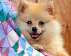 A lovely guy   http://ift.tt/2mVKOqR via /r/dogpictures http://ift.tt/2n4rQ1D  #lovabledogsaroundtheworld