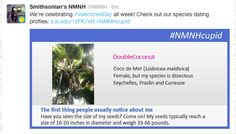 Smithsonian National Museum of Natural History, Feb 2015 #NMNHCupid