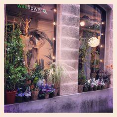 Flowershop in Paris : Wax Flower | 14, rue Bernard Palissy 75006 Paris