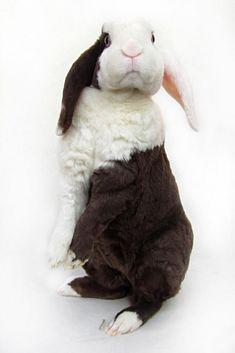 very unique . Funny Bunnies, Baby Bunnies, Cute Bunny, Bunny Rabbits, Zoo Animals, Animals And Pets, Cute Animals, Cutest Bunny Ever, Cutest Bunnies