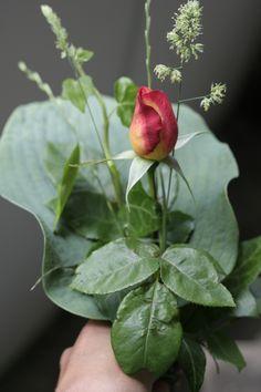 Förstår du blommornas språk? - Miljövänliga Algomin®