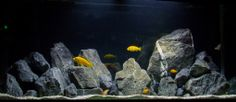African Cichlid Aquarium using limestone rock. This is a nice scape but it loses a little of the natural feel because of the vertical placing of the rocks. Cichlid Aquarium, Aquarium Aquascape, Aquarium Rocks, Cichlid Fish, Aquarium Setup, Aquarium Design, Aquarium Fish Tank, Planted Aquarium, Aquarium Ideas