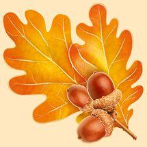 Империя Поздравлений - - Fall Arts And Crafts, Autumn Crafts, Autumn Art, Autumn Leaves, Butterfly Drawing, Leaf Drawing, Nature Drawing, Watercolor Fox Tattoos, Fall Clip Art