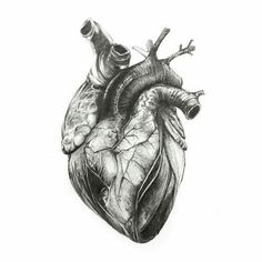 Anatomical Heart Drawing, Anatomical Heart Tattoos, Medical Illustration, Illustration Art, Anatomy Art, Heart Anatomy Drawing, Human Heart Drawing, Medical Art, A Level Art