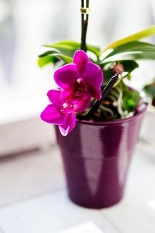 4 Fortunate Clever Hacks: Home Decor Blue Bathroom Colors beach home decor shabby chic.Cute Home Decor Decoration home decor on a budget interiors.Home Decor Plants Bathroom. Flowers In Jars, Container Flowers, Flower Pots, Pink Orchids, Pink Flowers, Organic Gardening, Gardening Tips, Homemade Plant Food, Homemade Fertilizer For Plants