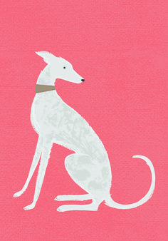 Sorcha Faulkner, whippet, greyhound, lurcher, illustration, design, drawing, art, colour, dog