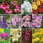 Blog- Perennials Made Easy.  She includes flower garden plans and designs.  AE