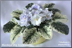 Buckeye Big Snowstorm