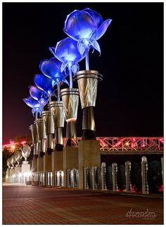 Blue Roses on Red River ~ Shreveport
