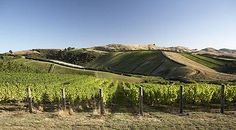 New Zealands vineyards: Five to visit  more about his business. He owns one of the most successful, profitable, vineyards in the owrld.
