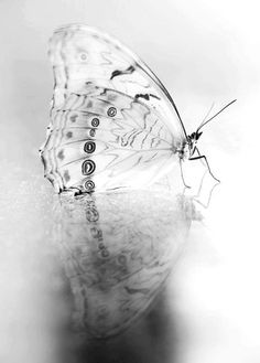 Beautiful butterfly in black and white Black N White, Black White Photos, Black And White Photography, Fotografia Pb, B&w Tumblr, Papillon Butterfly, White Butterfly, Butterfly Art, Art Beauté