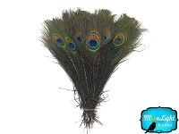 "200 Pieces - 10-12"" NATURAL Peacock Tail Eye Wholesale Feathers (bulk)"