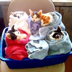 This Wordless Wednesday we show you how the kittens from The Daily Kitten do house chores. House Chores, Fluffy Blankets, Kittens And Puppies, Puppy Pictures, Kittens Cutest, Cat Day, Hot Chocolate, Cats Of Instagram, Cat Lovers