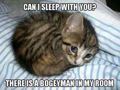 Scarried Cat Meme #Bogeyman, #Room