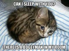 Scarried Cat Meme #Bogeyman, #Room