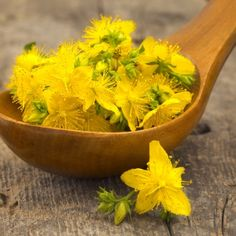 Shop for St. John's Wort Seeds by the Packet or Pound.Com offers Hundreds of Seed Varieties, Including the Finest and Freshest St. John's Wort Seeds Anywhere. Alternative Health, Alternative Medicine, Alternative Therapies, Alternative Treatments, Natural Medicine, Herbal Medicine, Natural Cures, Natural Health, St Johns Wort Plant