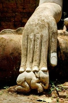 Buddha hand touching baby elephant