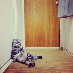 Instagram Cat