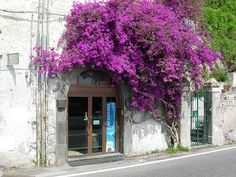 Cetara , Amalfi Coast. Cetara is a town and commune in the Province of Salerno in the Campania region of south-western Italy.  Cetara is located in the territory of the Amalfi Coast.