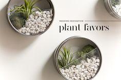 Plant Favors | Dearest Nature