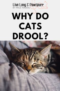 Ever wonder why your cat is a drool-y mess? Or why one cat drools and not the other? Check out this awesome explanation! Cat Love Quotes, I Love Sleep, Cat Info, Cats For Sale, Cat Health, Health Tips, Health Care, Cat Care Tips