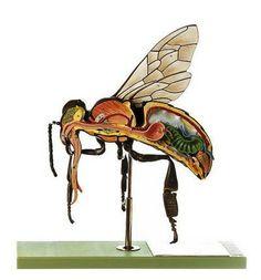 SOMSO Model of the Worker Bee http://www.gtsimulators.com/product-p/zos47-1.htm #SOMSOModels #SOMSOZoologyModels #WorkerBeeModel #BeeModel