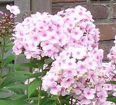 Flowers garden pink flora 19 Ideas for 2019 Table Rose, Window Box Flowers, Cheap Flowers, Sunflower Flower, Planting Flowers, Flowers Garden, Wedding Cakes With Flowers, Silk Flower Arrangements, Flower Backgrounds