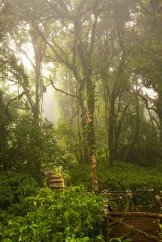 The misty jungle, Doi Inthanon National Park, Thailand (by penguinchris). Chiang Mai, Beautiful World, Beautiful Places, Amazing Places, Oh The Places You'll Go, Places To Visit, Doi Inthanon National Park, Sacred Garden, Koh Chang
