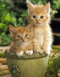 Watch us outgrow this pot, you will have to repot us in a short time. The next pot will have to be your home.