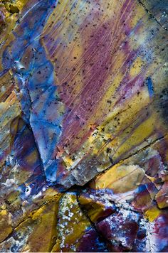 ~ Explosion of Colors ~ Escalante Petrified Forest, Utah....