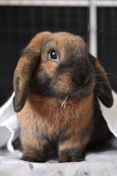 Chocolate for Easter @yummypets #Myron #rabbit