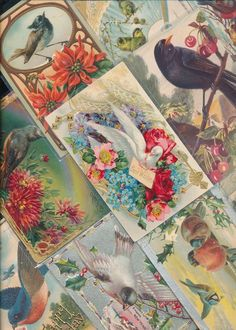 Lot of 25 Greetings Postcards all with * Beautiful BIRDS~ birds Vintage-a431