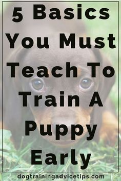 5 Basics You Must Teach to Train a Puppy Early - Dog Obedience Training Tips - . - 5 Basics You Must Teach to Train a Puppy Early – Dog Obedience Training Tips – - Puppy Training Tips, Crate Training, Training Your Dog, Potty Training, Training Collar, Training Classes, Training Videos, Toilet Training, Training Pads