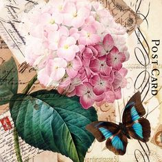 Floral postcard with butterfly