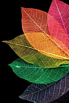 Foliage.jpg 500×749 pixels
