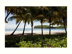 #PalmBeacht at #Grenada #Island | #TravelPhotography #travelphoto #travelphotoprint #caribbeansky #caribbean #caribbeanholiday #luciaeggenhoffer