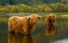 *The West Highland Way