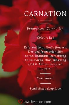 Carnation meaning. Red carnations symbolize deep love, appropriate in a funeral flower arrangement f Carnation Flower Meaning, Red Carnation, Flower Meanings, Color Meanings, Funeral Flower Arrangements, Funeral Flowers, My Flower, Flower Pots, Flower Colour